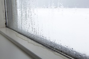 Window Condensation Longmont